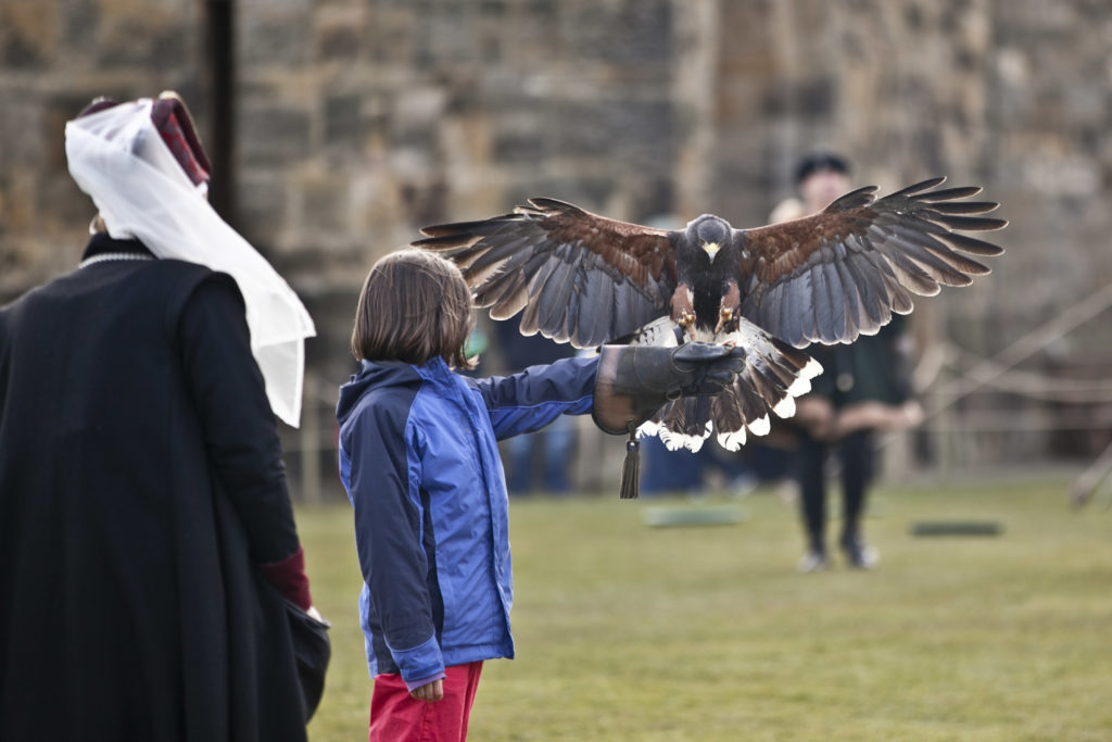 Falconry at Alnwick Castle