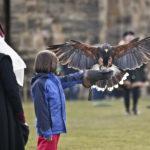 Falconry at Alnwick Castle